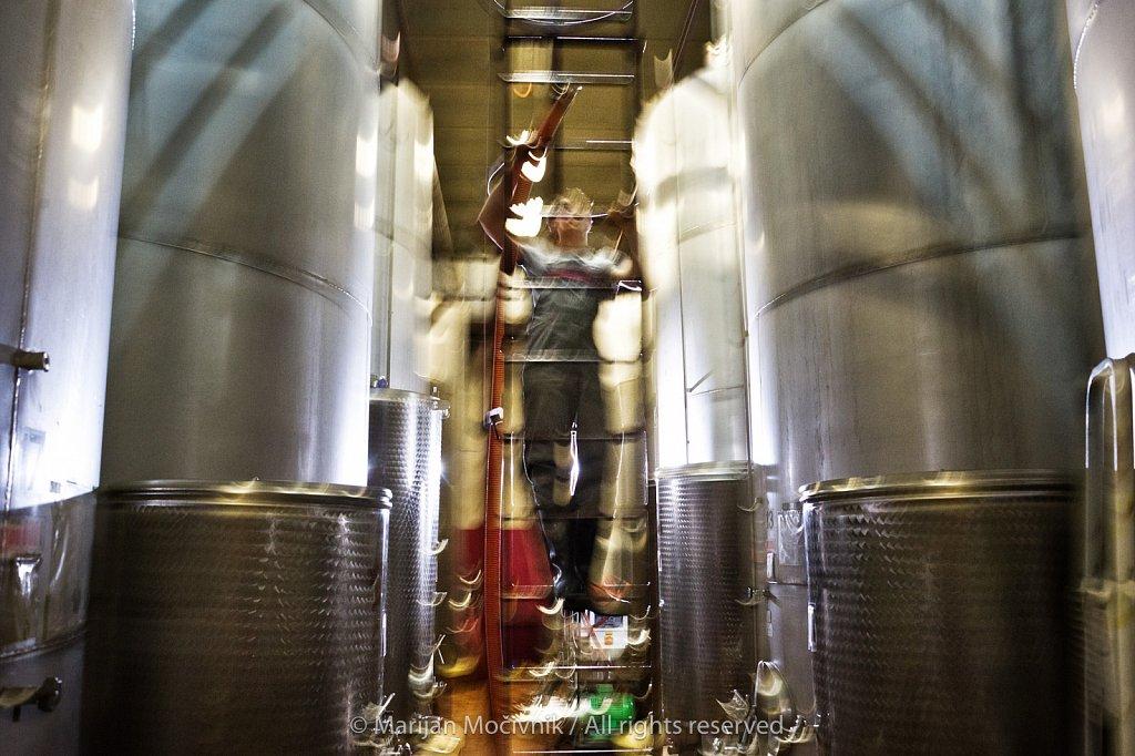 Kras (Karst), Slovenia, Vinakras winery