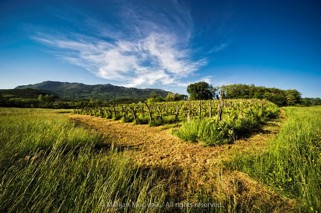 Vipava Valley, Slovenia