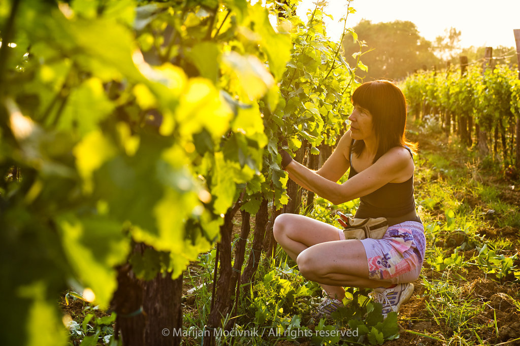 Barbi V. Močivnik, Piana Wines