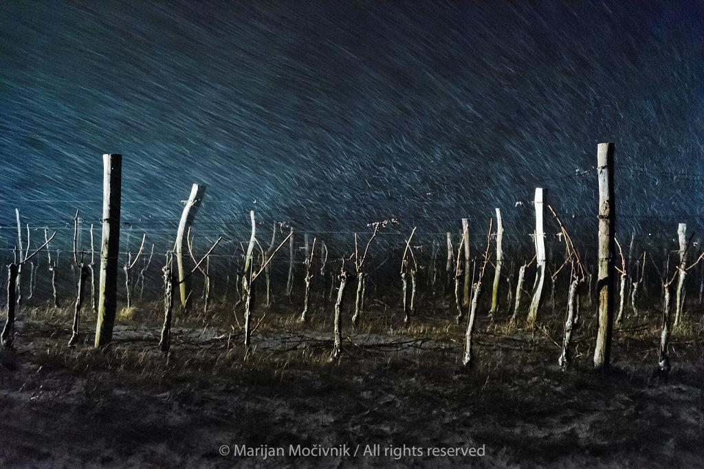 Sauvignon-Piana-sneg-9707.jpg
