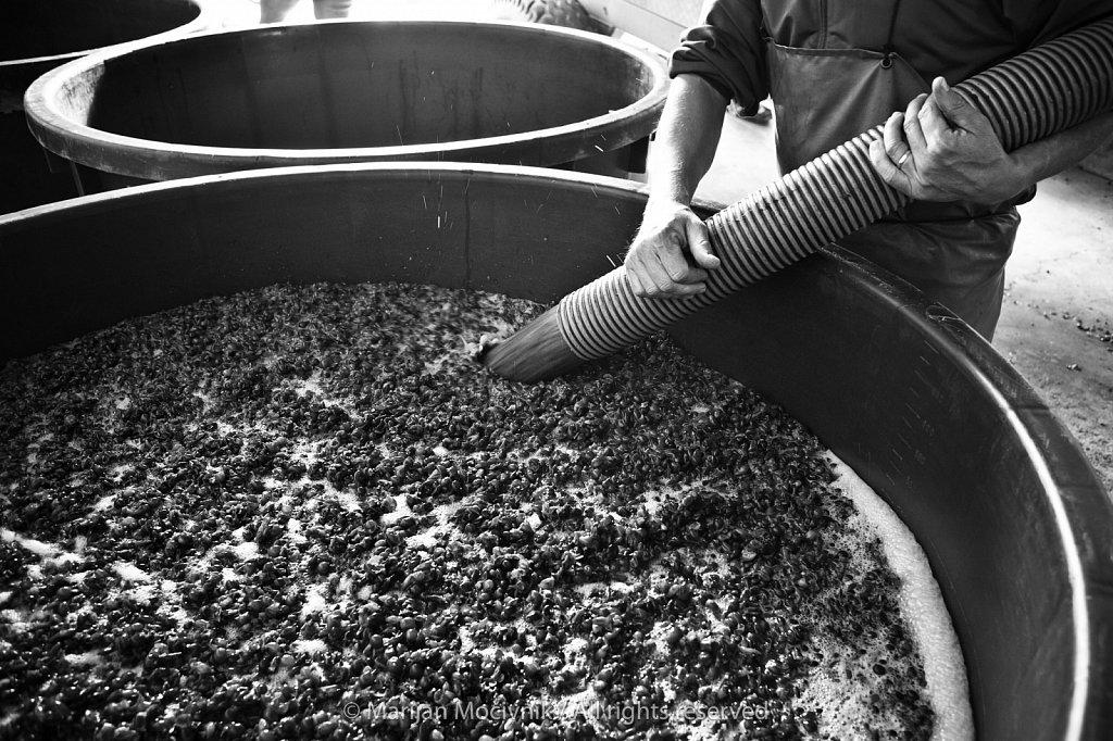 Steyer winery, Štajerska, Slovenia
