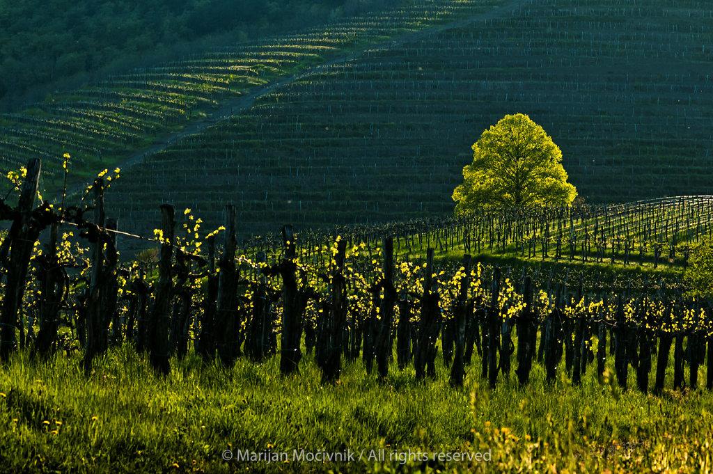 Slap, Vipava Valley, Slovenia
