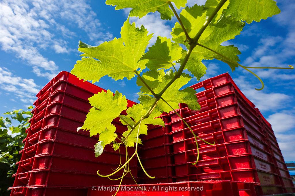 P&F Winery, Ormož, Štajerska, Slovenia