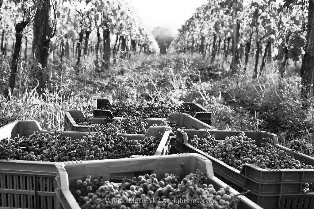Piana Winery, Dobravlje, Vipava Valley, Slovenia