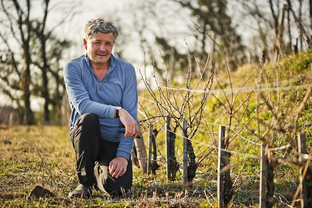 Georg Mikhaylin, IVV Wines