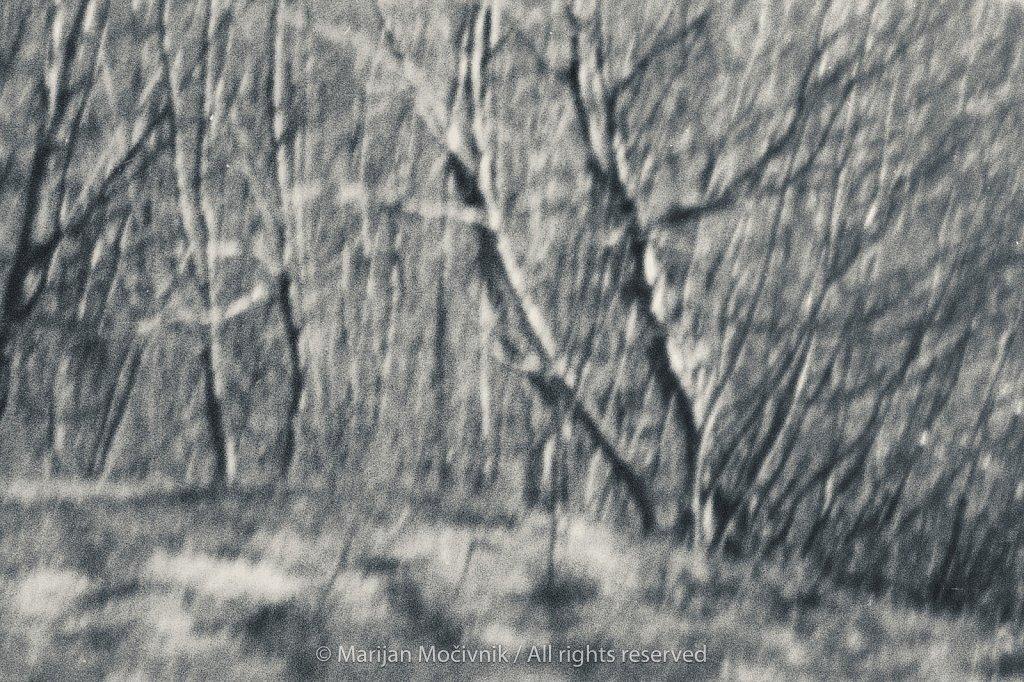 Film-2019-001-sken-009-gozd-2048.jpg