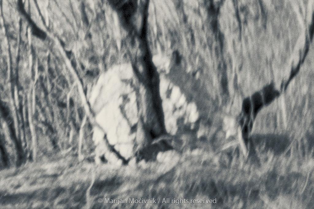 Film-2019-001-sken-001-drevo-in-skala-2048.jpg
