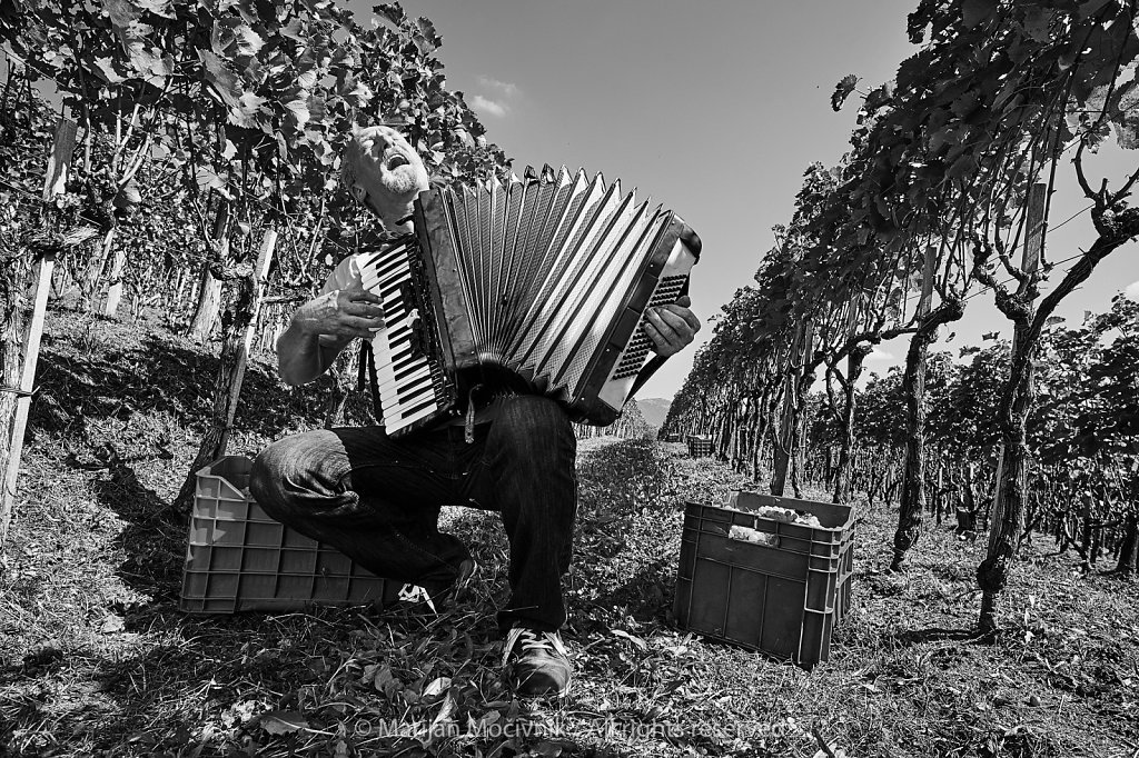 Goran-Velikonja-Harmonika-trgatev-Svetlik-7812-2048.jpg