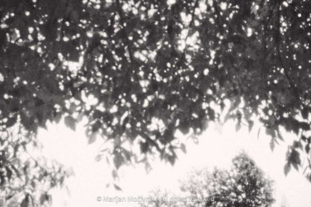 Visece-veje-Podzemelj-Bela-krajina-4906-2048.jpg