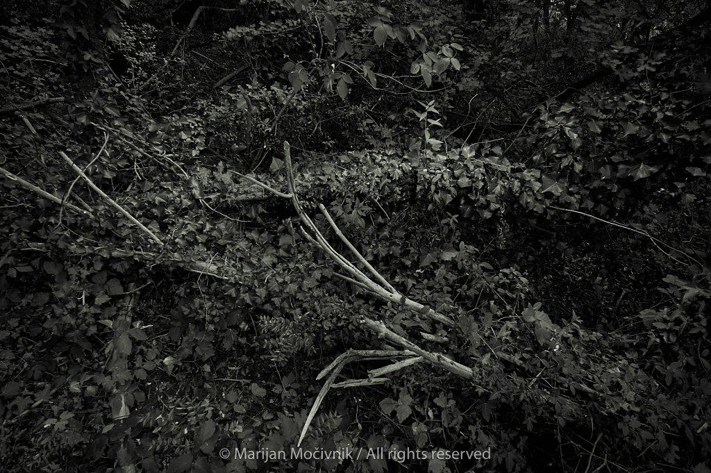 Tree's bones