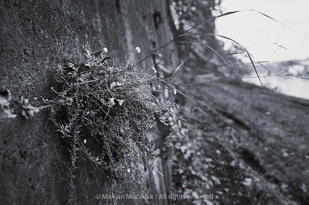 Rastlina-v-zidu-Rim-ob-Tiberi-7475-2048.jpg