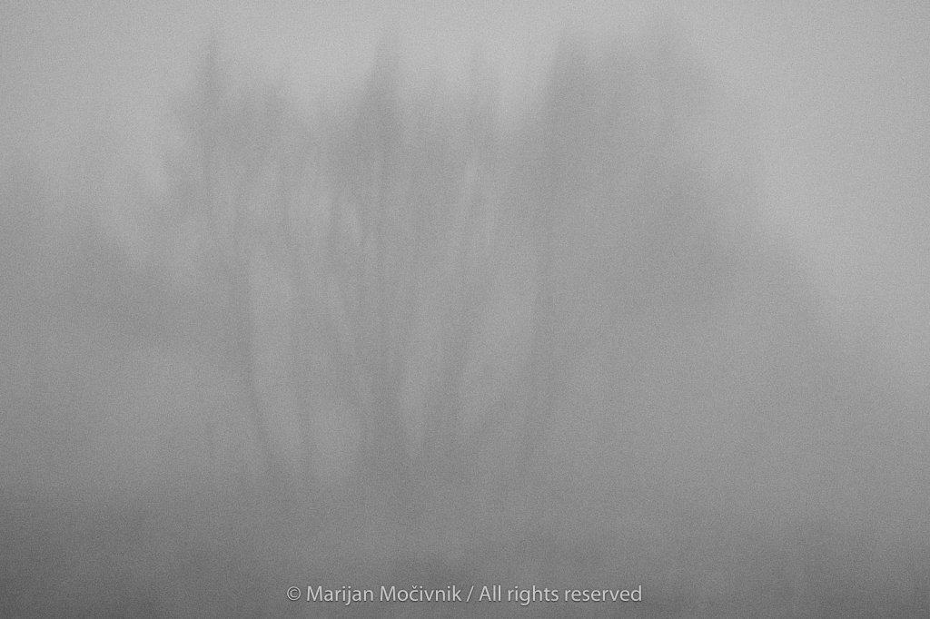 Otlica-megla-drevesa-1877-1-2048.jpg