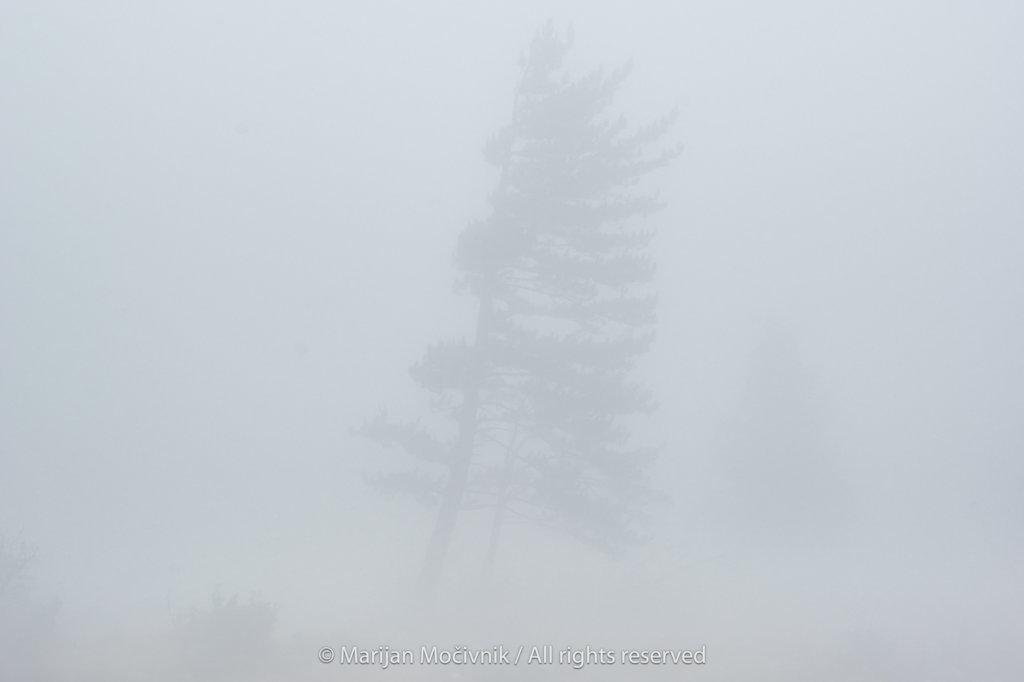 Drevo-silhueta-megla-Otlica-2118-2048.jpg
