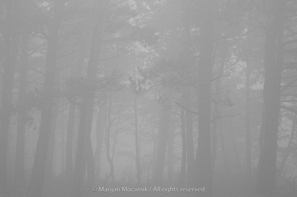 Otlica-Otlisko-okno-gozd-megla-2256-1-2048.jpg