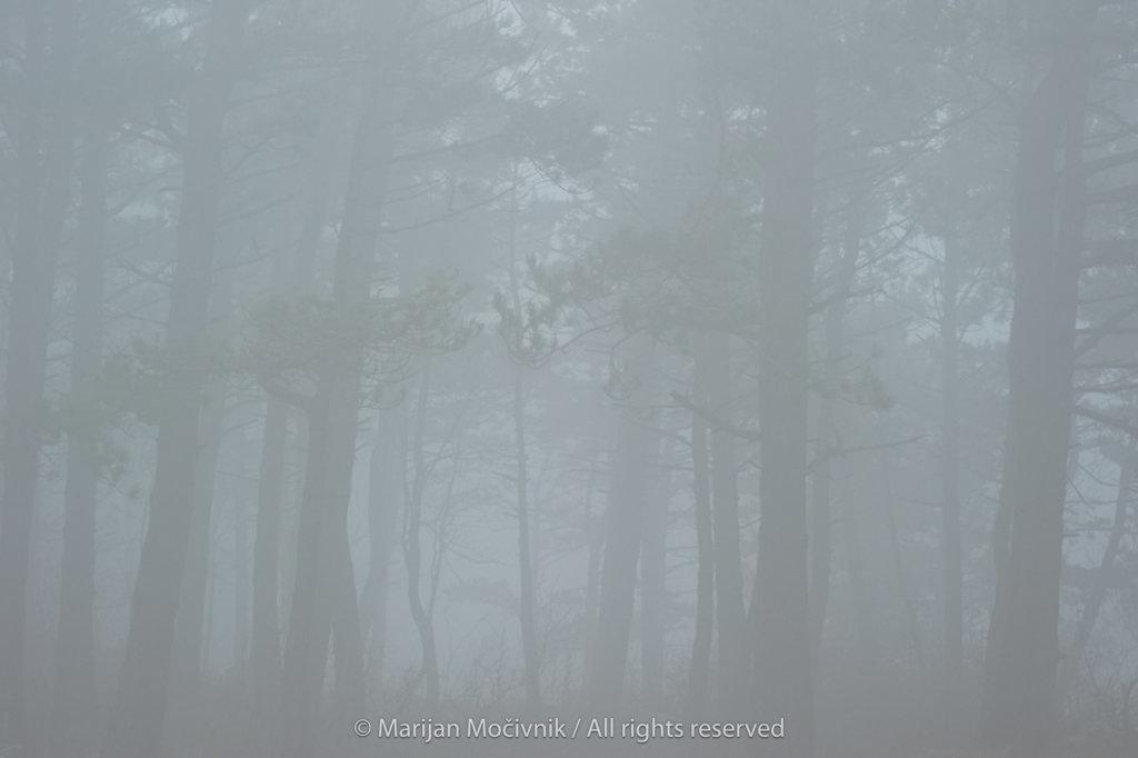 Otlica-Otlisko-okno-gozd-megla-2256-2048.jpg