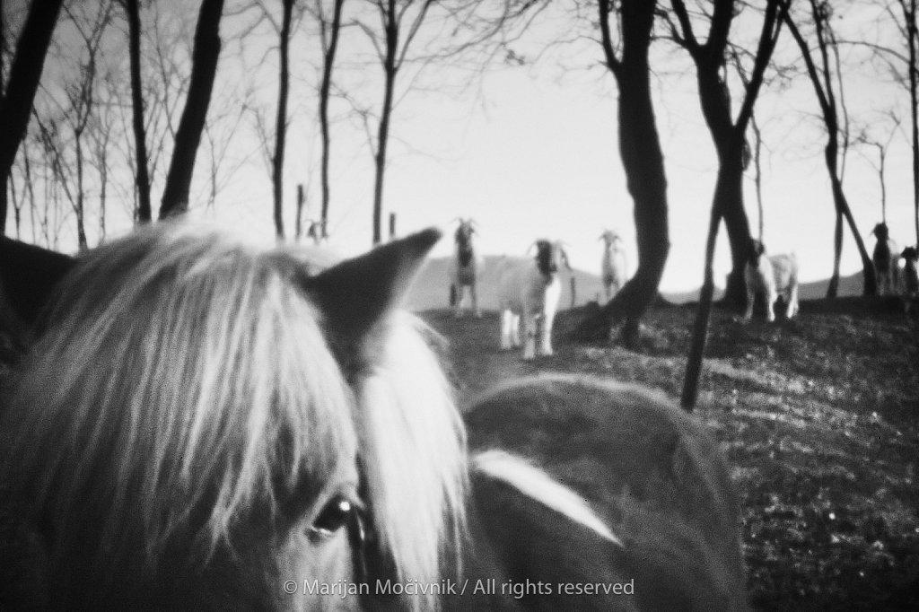 Konj-in-koze-Dobravlje-9494-1-2048.jpg