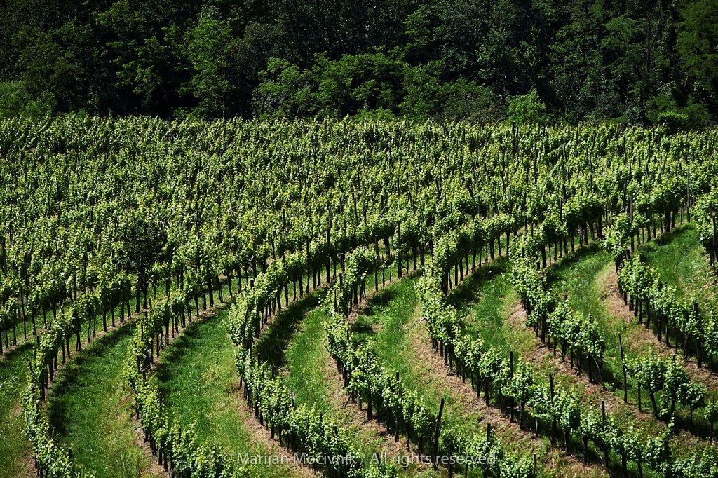 Vinograd-nad-vasjo-Zalosce-8539-2048.jpg