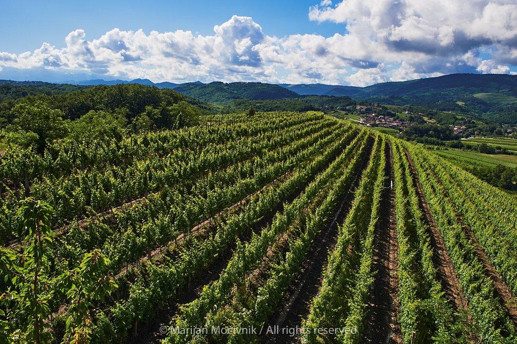 Vinograd-pejsaz-Zalosce-7658-2048.jpg