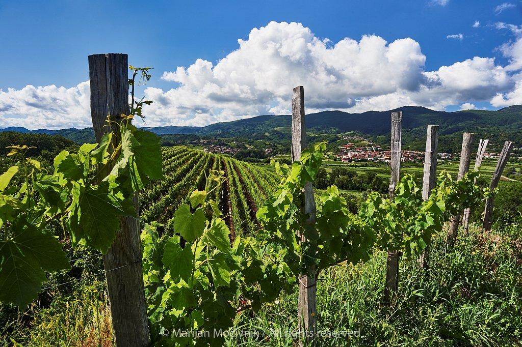 Vinograd-pejsaz-Zalosce-Dornberk-7662-2048.jpg