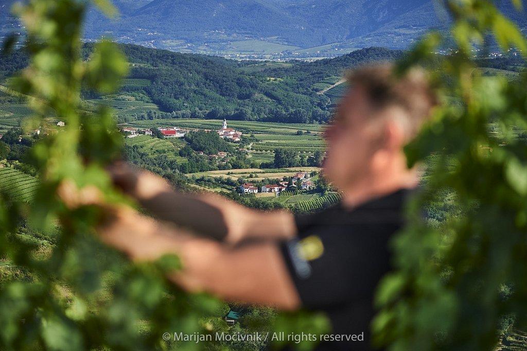Sandi-Slejko-v-vinogradu-Kamnovec-1547-2048.jpg