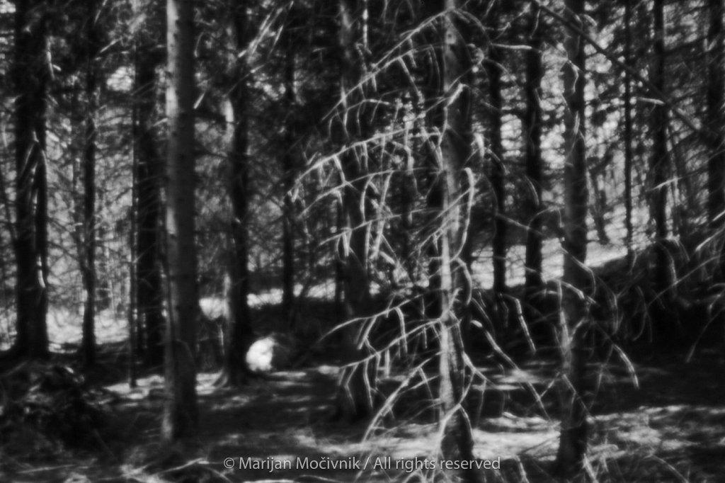 Caven-Smrekov-gozd-Skala-5558-2048.jpg