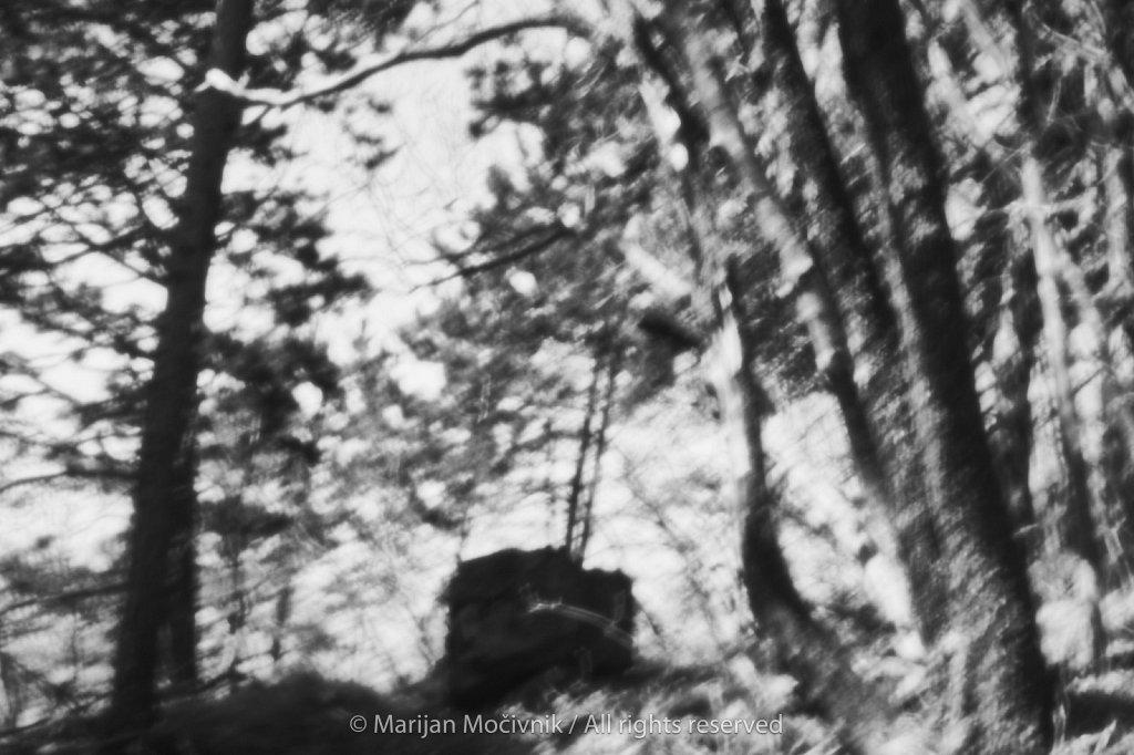 Caven-gozd-Skala-srednjecavenska-pot-5314-2048.jpg